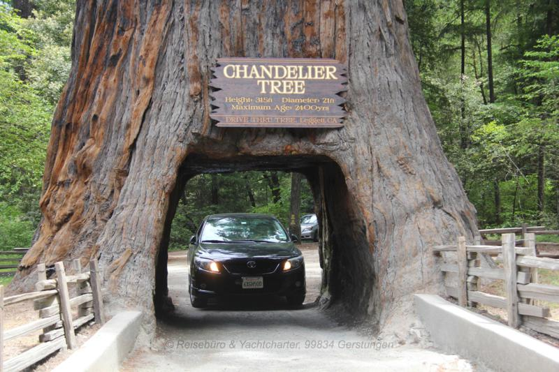 USA 2020 Avenue of Giants Wohnmobilreise Kalifornien